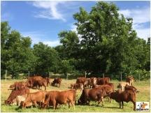 Bar Circle breeding herd